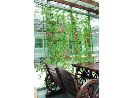 Комплект для вьющихся растений GREEN APPLE GLSCL-6 (Б0008307)